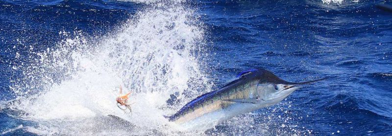 True Blue Fishing Charters - Attractions