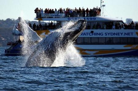 Whale Watching Sydney - Attractions