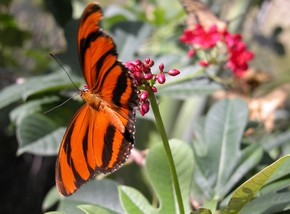 Butterfly Farm - Attractions
