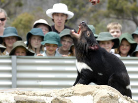 Tasmania Zoo - Attractions