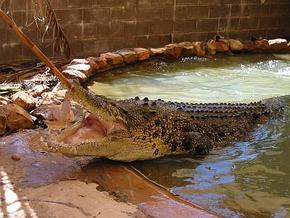 Wyndham Zoological Gardens And Crocodile Park - Attractions