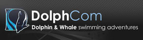 Dolphcom - Dolphin  Whale Swimming Adventures - Attractions