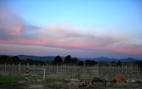 Buller View Wines - Attractions