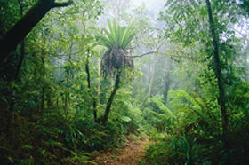 Lamington National Park And OReillys - Attractions