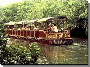 Daintree Rainforest River Trains - Attractions