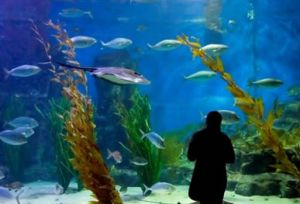 Melbourne Aquarium - Attractions
