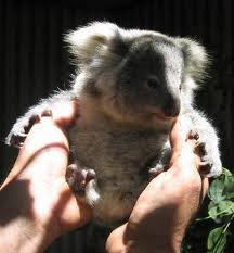 Koala Park Sanctuary - Attractions