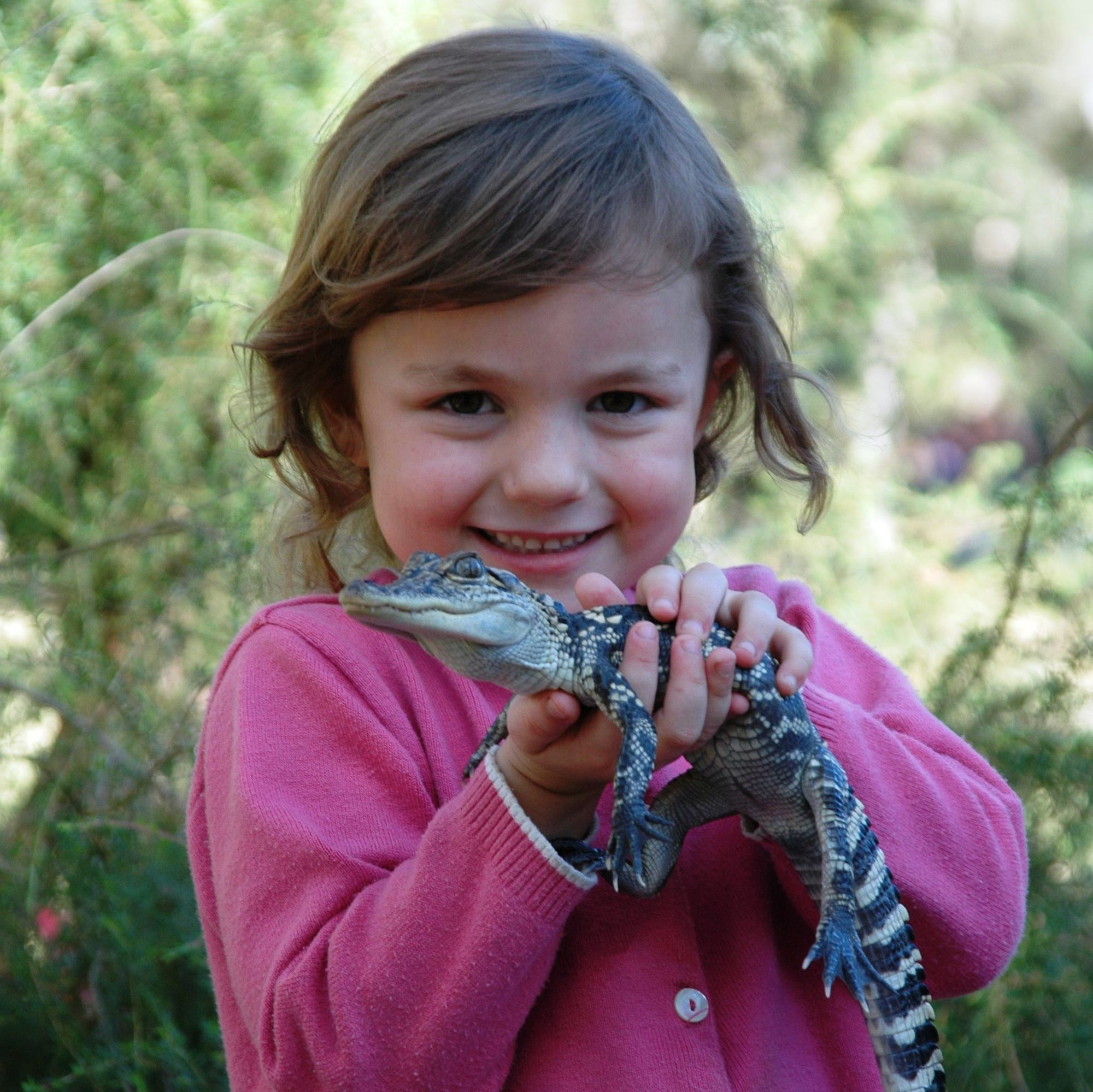 Australian Reptile Park - Attractions