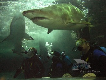 Manly SEA LIFE Sanctuary - Attractions