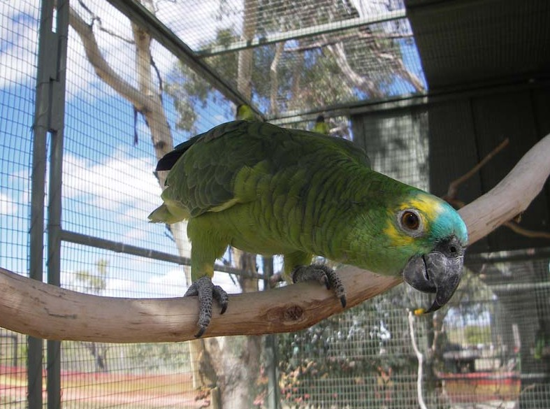 Darling Downs Zoo - Attractions
