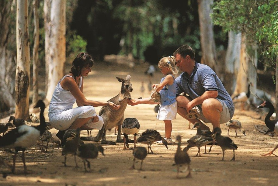 Billabong Sanctuary - Attractions