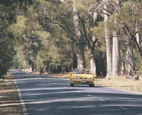Ludlow Tuart Forest - Attractions