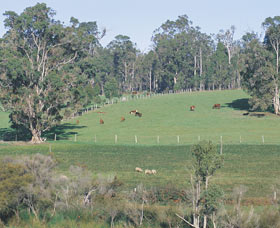 Scenic Drives - Bunbury Collie Donnybrook - Attractions