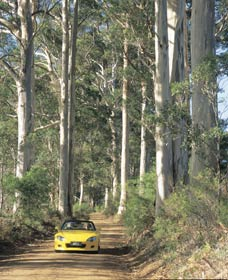 Mount Shadforth Scenic Drive - Attractions