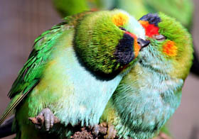 Rainbow Jungle - The Australian Parrot Breeding Centre