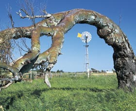 Greenough Leaning Trees - Attractions