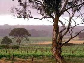 Yangarra Estate Vineyard - Attractions
