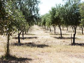 Talinga Grove Olive Oils - Attractions