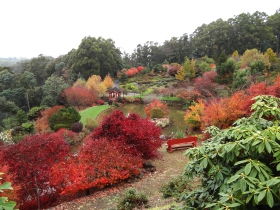 Emu Valley Rhododendron Garden - Attractions