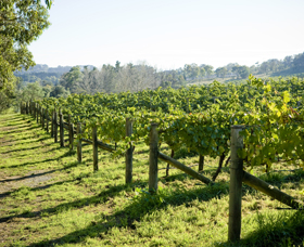 Surveyor's Hill Vineyards - Attractions