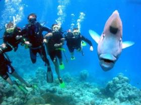 Magic Mountain Dive Site - Attractions