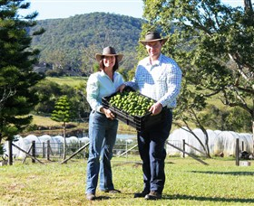 Hinterland Feijoas - Attractions
