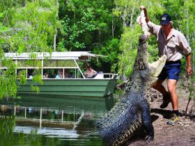 Hartleys Crocodile Adventures - Attractions