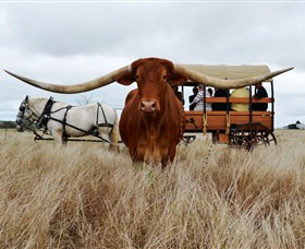 Texas Longhorn Wagon Tours and Safaris - Attractions