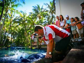 The Living Reef on Daydream Island - Attractions