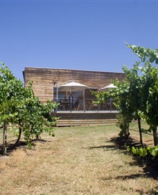 Shantell Vineyard - Attractions