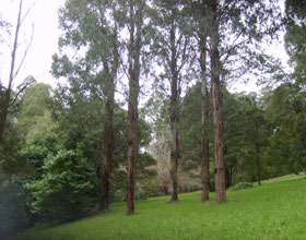 Mount Dandenong Arboretum - Attractions