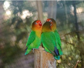 Ballarat Bird World - Attractions