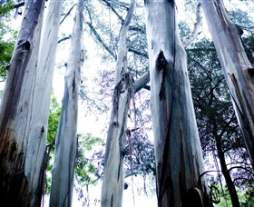 Dandenong Ranges National Park - Attractions