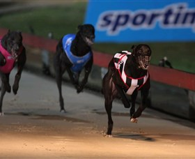 Dapto Dogs - Attractions