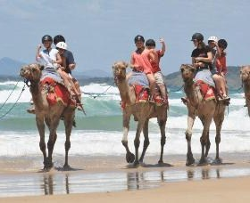 Camel Rides with Coffs Coast Camels - Attractions