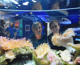 Solitary Islands Aquarium - Attractions