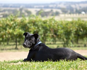 Moothi Estate Vineyard and Cellar Door - Attractions