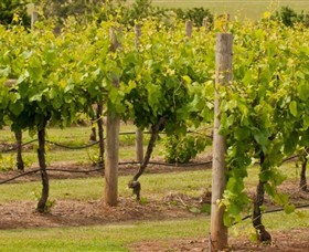 Mt Coghill Vineyard - Attractions