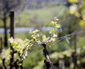 Whistling Eagle Vineyard - Attractions