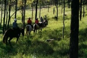 Hunter Valley Horse Riding and Adventures - Attractions
