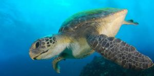 Byron Bay Dive Centre - Attractions