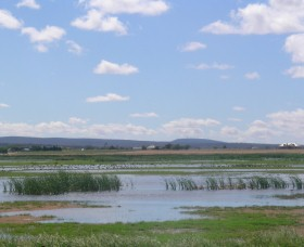 Fivebough Wetlands