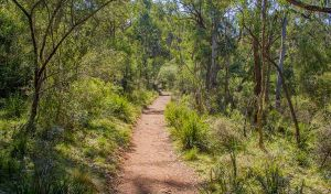 Mares Forest Creek walking track - Attractions
