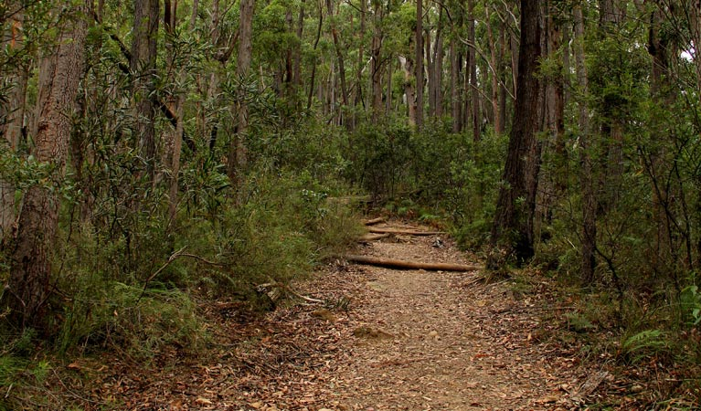 Pigeon House Mountain Didthul walking track - Attractions