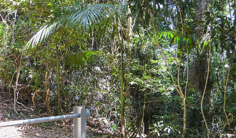 Goorgana walking track - Attractions