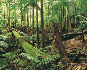 Wollumbin-Mount Warning National Park - Attractions