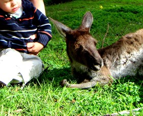 Bunbury Wildlife Park - Attractions