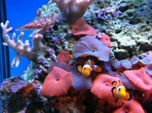 Tropical Marine Centre - Attractions
