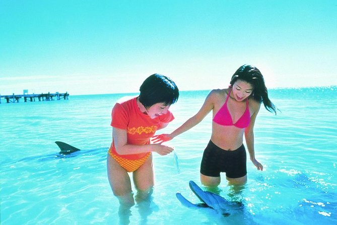 Monkey Mia Dolphins  Shark Bay Air Tour From Perth - Attractions