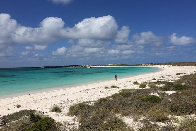 Abrolhos Island Half Day Fly and Flipper - Attractions